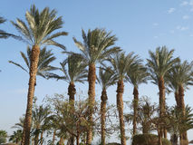 Palm trees. On the blue sky and clouds background Royalty Free Stock Image