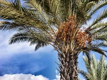 Palm trees and blue sky Royalty Free Stock Photos