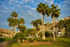 Palm trees before blue sky with few clouds Royalty Free Stock Photography