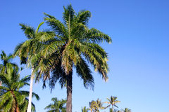 Palm Trees and Blue Sky in Hawaii stock photography