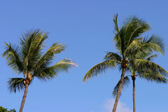 Palm Trees and Blue Sky in Hawaii stock photos