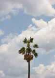 Palm trees in the blue sky. An image of a nice palm trees in the blue sunny sky Royalty Free Stock Image