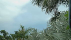 Palm trees and blue sky from a passing car. On a cloudy day stock video footage