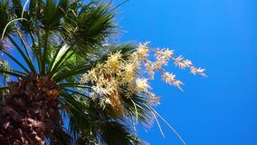 Palm Trees and Blue Sky. Slow motion video stock footage