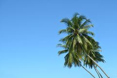 Palm trees in blue sky Royalty Free Stock Photography