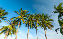 Palm trees and blue sky Stock Photography