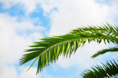 Palm trees and the blue sky. Tropical background royalty free stock image