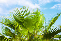 Palm trees and the blue sky. Tropical background stock photo