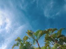 Palm trees and blue sky tropical background royalty free stock photos