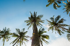 Palm trees and blue sky Royalty Free Stock Image