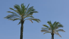 Palm trees and blue sky stock footage