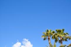 Palm trees at blue sky Stock Photos