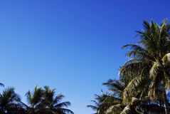 Palm trees and blue sky and white clouds Royalty Free Stock Images