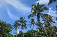 Palm trees on Bahia Honda Royalty Free Stock Images