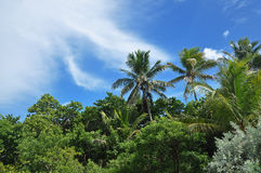 Palm trees on Bahia Honda Stock Photography