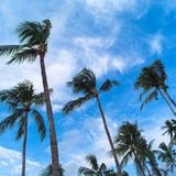 Palm trees on blue sky and white clouds. Palm trees over blue sky and white clouds stock photos