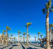 Palm trees on a boardwalk facing the sea stock image