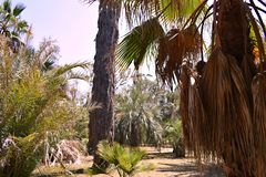 Palm trees in botanic garden on island of Lokrum-Croatia royalty free stock images
