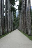 Palm trees at  botanic gardens Rio de Janeiro Brazil. Stock Photography