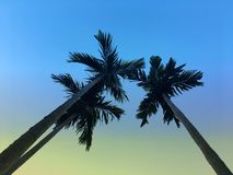 Palm trees from bottom view with beautiful sunset sky background stock photography