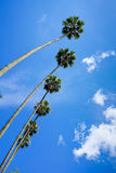 Palm trees bottom view Royalty Free Stock Photo