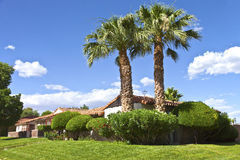 Palm trees in a Boulder city neighborhood Nevada. Stock Photo