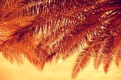 Free Palm Trees Branches At Sunset Royalty Free Stock Photo - 128414285