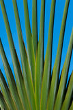 Palm trees branching out. Pattern royalty free stock image