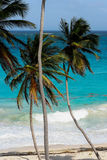Palm trees on bright blue caribbean beach. Bended Palm trees at the beach with white sand Stock Photography