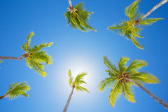 Palm trees on bright summer day with clear blue sky Royalty Free Stock Photo