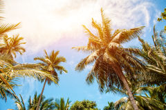 Palm trees and bright sun on blue sky background Royalty Free Stock Images