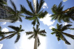 Palm  trees on a bright sunny day Stock Image