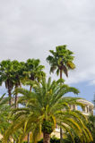 Palm trees and building Stock Images