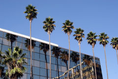Palm trees and building. A row of tall palm trees next to a building Stock Images