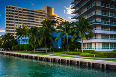 Palm trees and buildings on Belle Isle, in Miami Beach, Florida. Royalty Free Stock Image