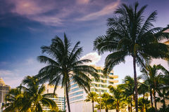 Palm trees and buildings in Miami Beach, Florida. Royalty Free Stock Images