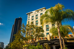 Palm trees and buildings in San Diego, California. Stock Photo