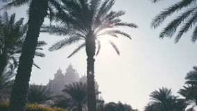 Palm trees and buildings in the UAE. Silhouette of an old building stock video footage