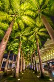 Palm trees in bulb light at night Royalty Free Stock Images