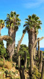 Palm trees and cactus in the botanical garden of Blanes Royalty Free Stock Photos