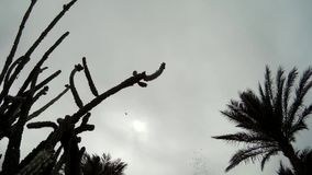 Palm Trees cactus silhouette against cloudy Sky stock video footage