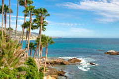Palm Trees on California Coast. Palm Trees on the Coast of California, USA royalty free stock photos