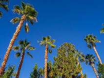 Palm trees, California Stock Photo