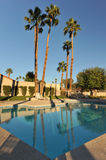 Palm trees by a calm pool Royalty Free Stock Photo
