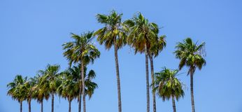 Palm trees at Cannes on the cote d`azur. stock photo