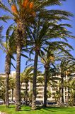 Palm trees at Cannes in France Stock Images