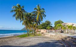 The palm trees on Caribbean beach, Martinique island. The palm trees on Caribbean beach, Martinique island, French West Indies Stock Image