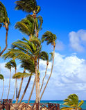 Palm trees on caribbean coast Stock Image