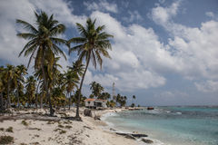 Palm Trees on Caribbean Island Royalty Free Stock Images