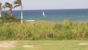 Palm trees on Caribbean island tropical paradise. Tropical ocean beach paradise vacation palm trees stock footage